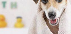 Aprenda dar banho seco em seu pet como alternativa para o inverno